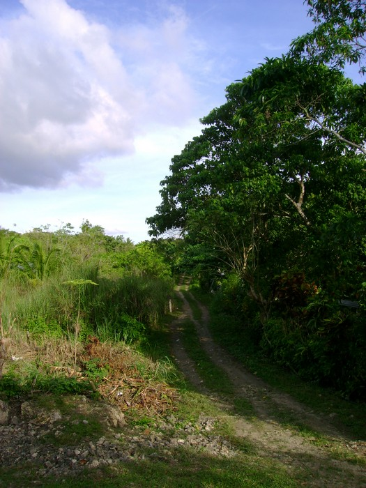 A view of my anticipated home in Bohol.  Can you see it?
