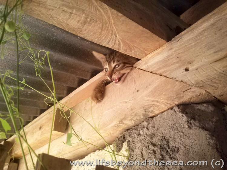 Catsby-nextday (3)
