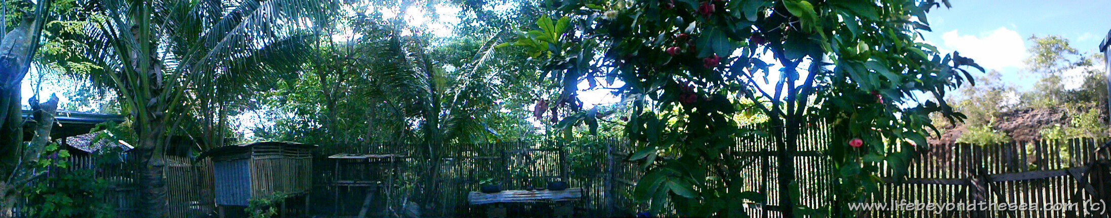 A panorama shot of my yard.  I plan to build a nipa-hut patio in the center later this year.