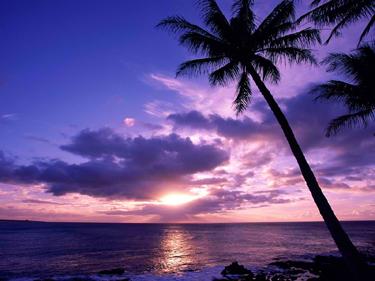 tropical evening